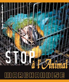 animalmarchandisealege.jpg